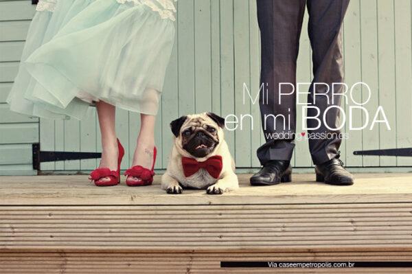 Mi perro en mi boda