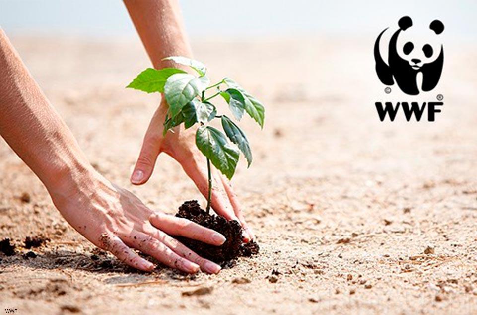Regalos solidarios para bodas WWF 961 x 634