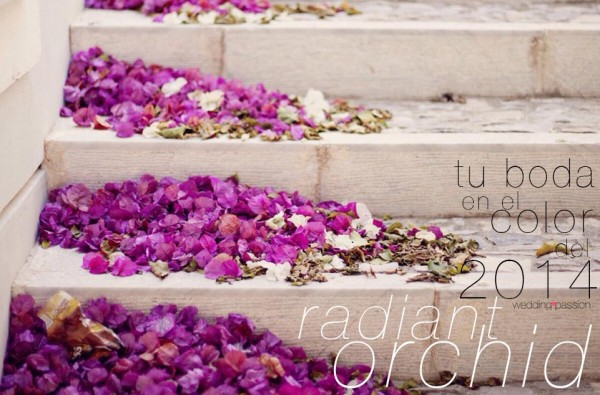 Radiant Orchid-961x634