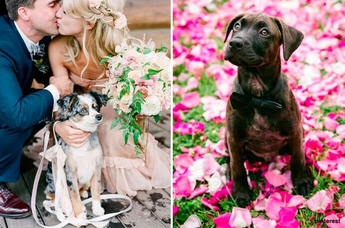 fotos-de-perros-en-bodas-691x457