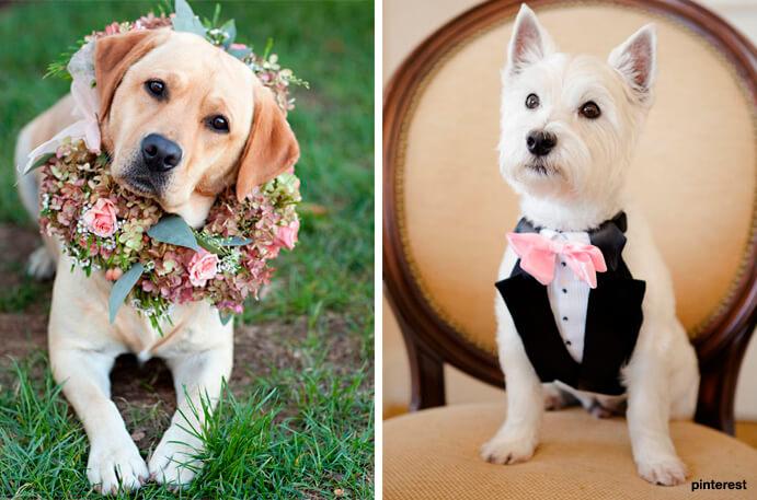 perro-boda-anillos-691x457