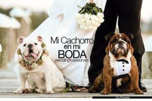 Perros en bodas, mi cachorro en mi Boda