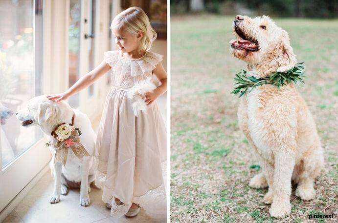 perros-en-las-bodas-691x457