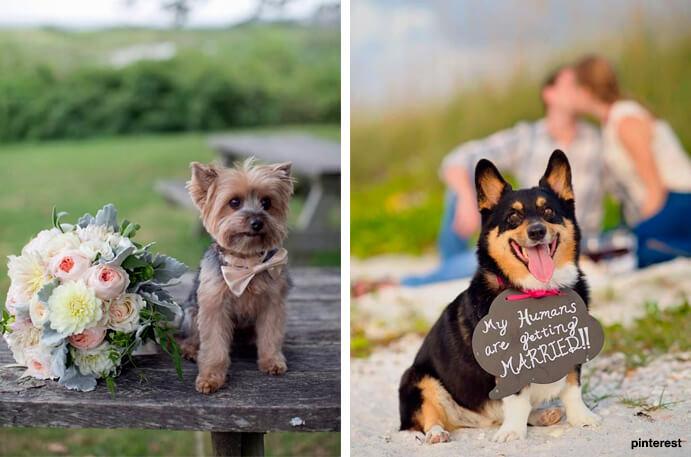 perros-en-mi-boda-691x457