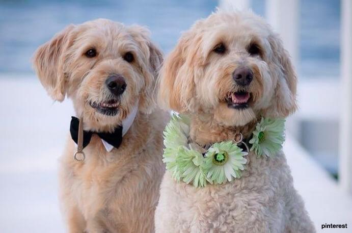 perros-en-una-boda-691x457