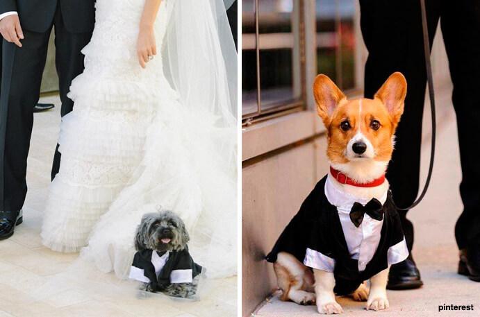 perros-y-bodas-691x457