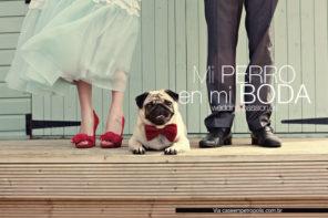 Celebrar boda con perros, mi perro en mi boda