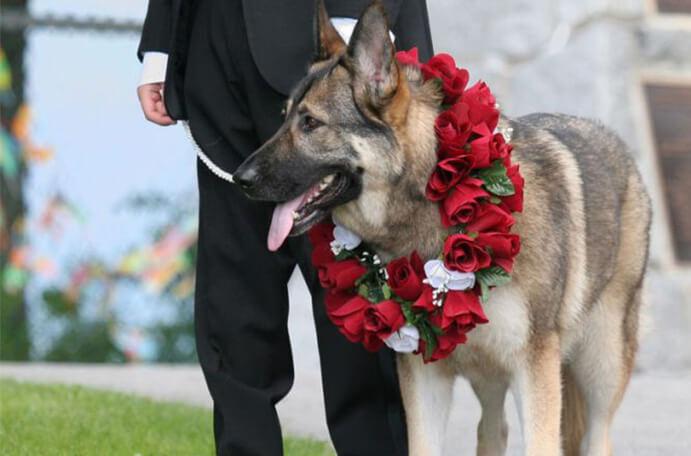 perros en bodas 691 x 456