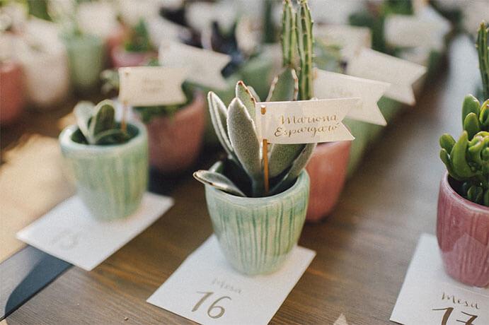 cactus-regalo-boda-691x460