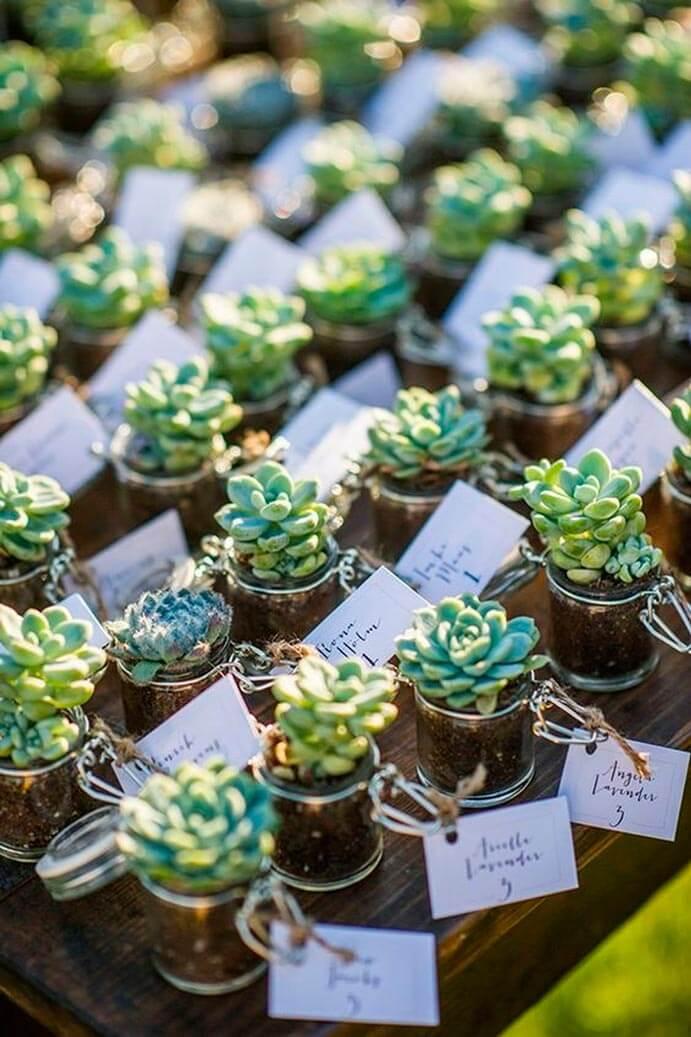 mini-plantas-regalo-boda-691x1037