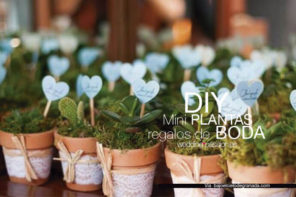 Mini plantas DIY regalos de boda