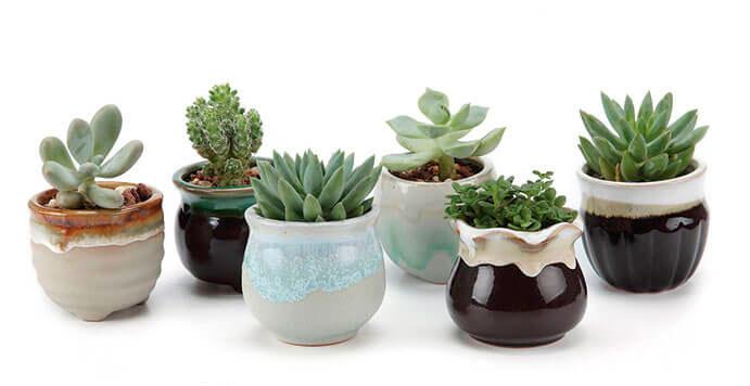mini-cactus-691x1028